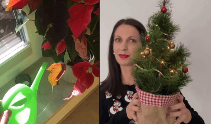 YAVEON Mitarbeiterin mit Weihnachtsbaum