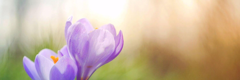 Auf in den Frühling!